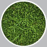 Togliere le macchie di erba