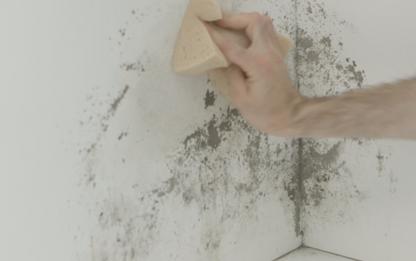 Descubre c mo eliminar el moho de las paredes con ace cl sica - Moho en la pared ...